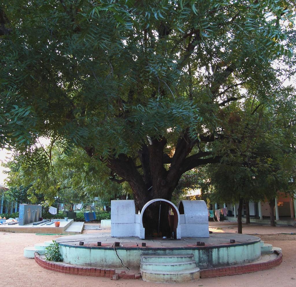 Árbol de Nim, con cuatro altares blancos en la base del tronco.
