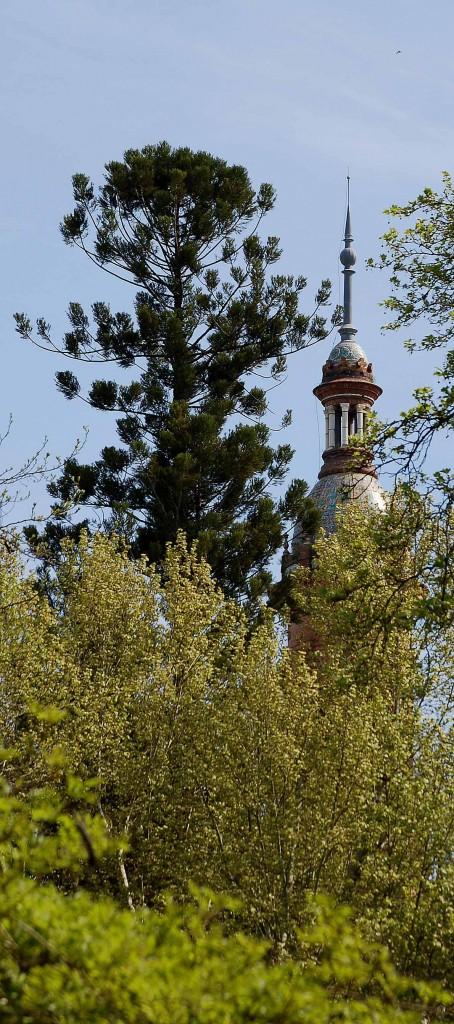 Araucaria y torre