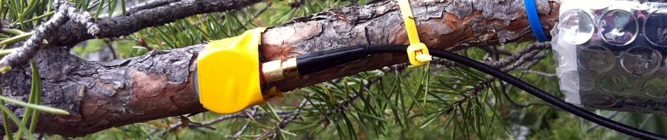 Sensor de emisiones acústicas en una rama de pino. Fuente: blog de Marcus Maeder.