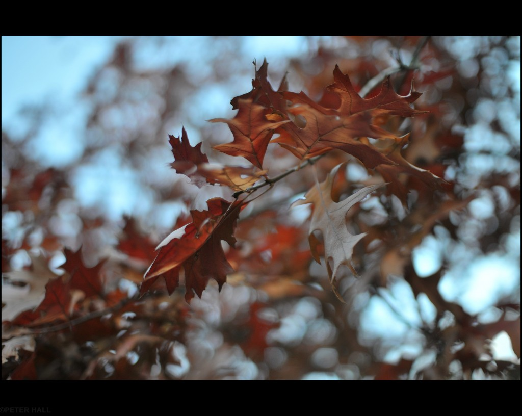 """""""Azules y marrones"""" por Peter H."""