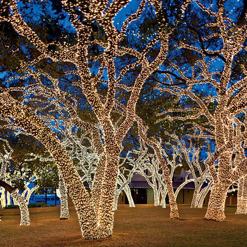 Árboles iluminados en Johnson City, Texas. Foto de Art Meripol.
