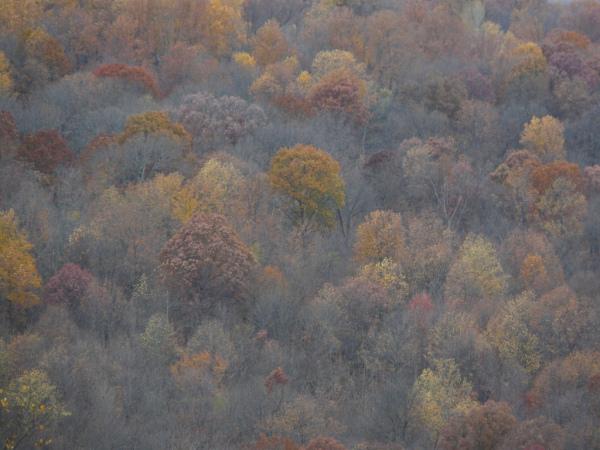 Bosque de Shakerag Hollow en Sewanee, Tennessee, EEUU, donde está el mandala. Autor: David Haskell.
