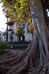 Ficus_JMurillo
