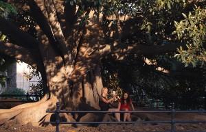 Ficus_Palos