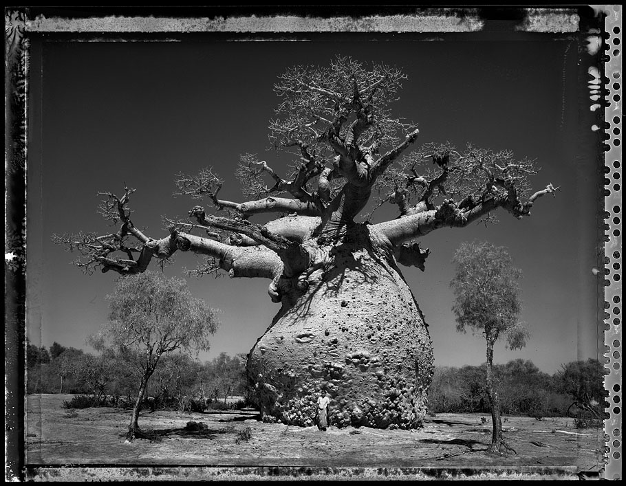 """Baobab, Tree of Generations #29, Madagascar 2010"", por Elaine Ling"