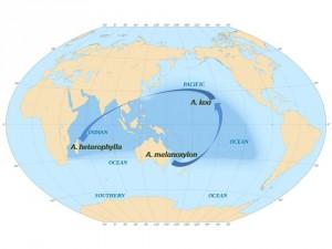 mapa acacias