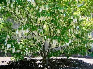 Foto de Naomi Sachs del Árbol de los Deseos de Yoko Ono en Washington DC.