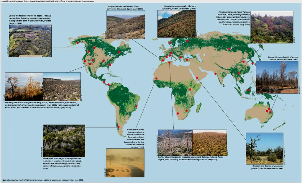Mapa con algunos bosques que han sufrido mortalidad masiva de árboles (Allen, 2009).