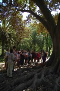 12_Ficus