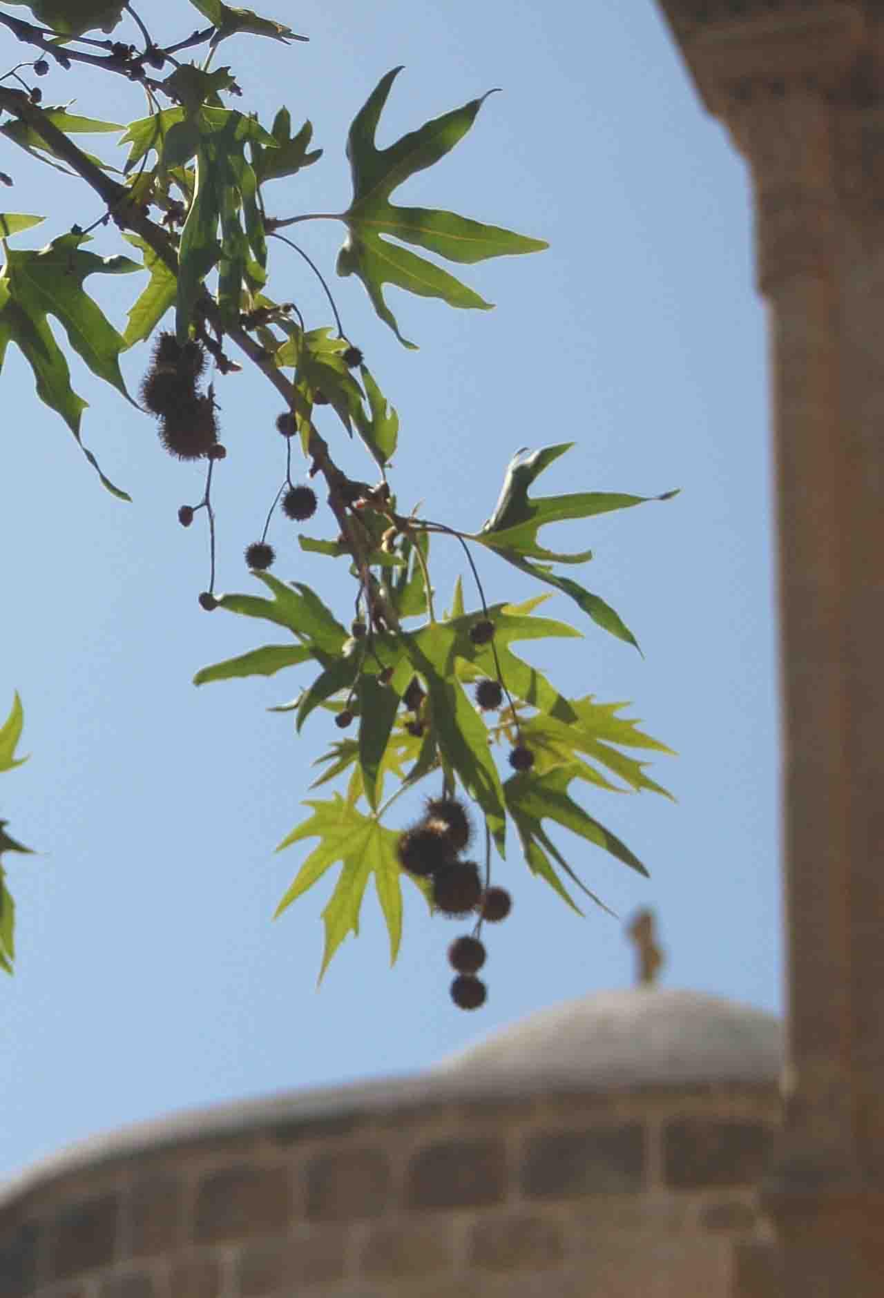 Ficción | Los Árboles Invisibles